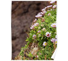 Cliff Wildflowers Poster
