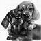 The Love Of Dachshunds