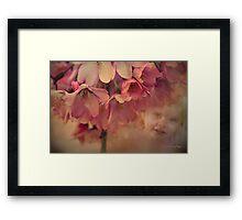 Blossom Baby  Framed Print