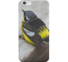Yellow Rumped Warbler iPhone Case/Skin