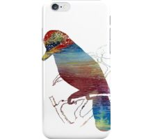 Bluejay iPhone Case/Skin