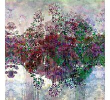 P1440807-P1440808 _XnView _GIMP _2 Photographic Print
