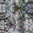 P1440855-P1440856 _XnView _GIMP by Juan Antonio Zamarripa [Esqueda]