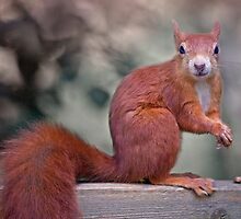 A Nut for a Nut? by Krys Bailey