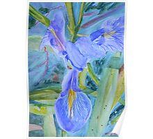Iris among the Grass  Poster