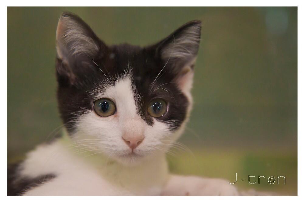 kute kitten - pet shop by jtran