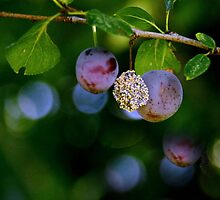 Autumn. III by Bluesrose