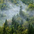 Mist on Valserine forest by Patrick Morand