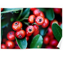 Berry Red Poster