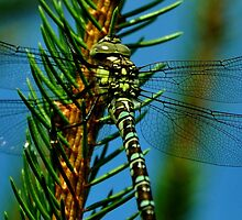 Hawker by Russell Couch