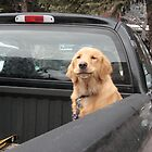 pup in truck by dianadudley