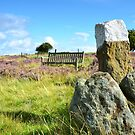 Is that seat taken? North Yorkshire Moors by apple88