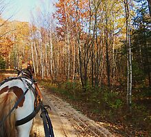 A Wagonride Through The Woods by EJ27