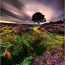 Into The Light - North York Moors, UK by Ian Snowdon /     www.downtoearthimages.co.uk