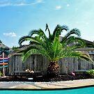 A Palm Tree by Eileen Brymer