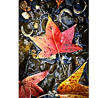 The color of change Photographic Print