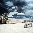 Infra-red Horse by Sharonroseart