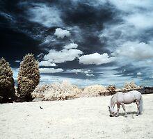 Infra-red Horse by Sharonroseart