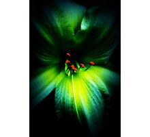 lily colour Photographic Print