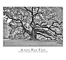 Angel Oak Black and white Photographic Print