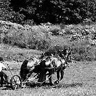 Plowing the Field  by Marcia Rubin