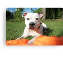 Millie on orange blanket Canvas Print