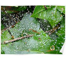 Water, Leaf  Poster