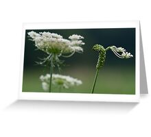 Caterpillar in Lace Greeting Card
