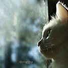His Window by ibjennyjenny