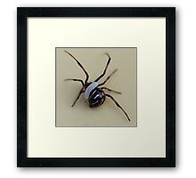 black widow and wasp egg? Framed Print