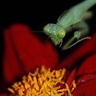 Mantis and Flower by Corri Gryting Gutzman