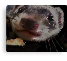 Weasel Close Canvas Print