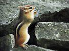Do Chipmunks Pray? by Laurie Minor