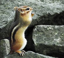 Do Chipmunks Pray? by Laurie Minor