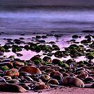 Purple Mood by Mariann Kovats