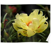 Sunny Moss Rose Poster
