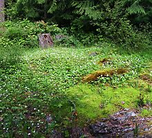 Wild Strawberry Rock Garden by terriclark