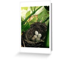 Nest in a Vineyard Greeting Card