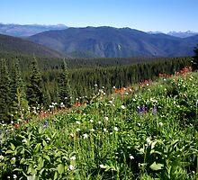 Heather Trail - Alpine Meadows by Sheri Bawtinheimer