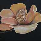 Magnolia by Christine Clarke