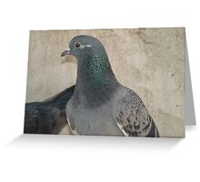 Mask - Love for Pigeons Greeting Card