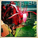 Gymea Lily Part 1 by Marita