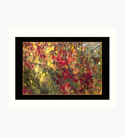 Colors of Autumn Art Print