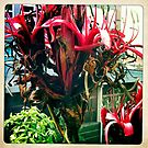 Gymea Lily Part 3 by Marita