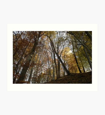 autumn in the deciduous forest Art Print