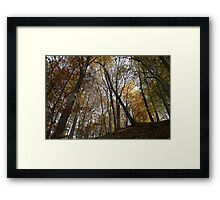 autumn in the deciduous forest Framed Print