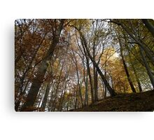 autumn in the deciduous forest Canvas Print