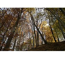 autumn in the deciduous forest Photographic Print