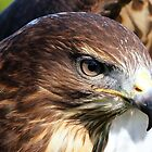 Birds of Prey by Clive