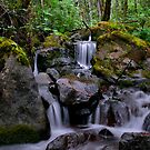 The Life Of The Forest by Charles & Patricia   Harkins ~ Picture Oregon